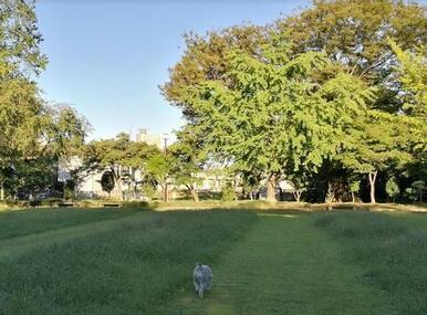 緑の森公園