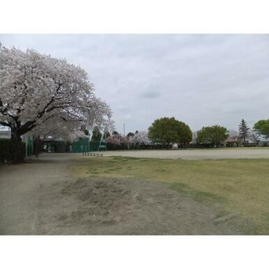若泉運動公園