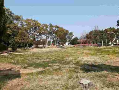 松の木公園